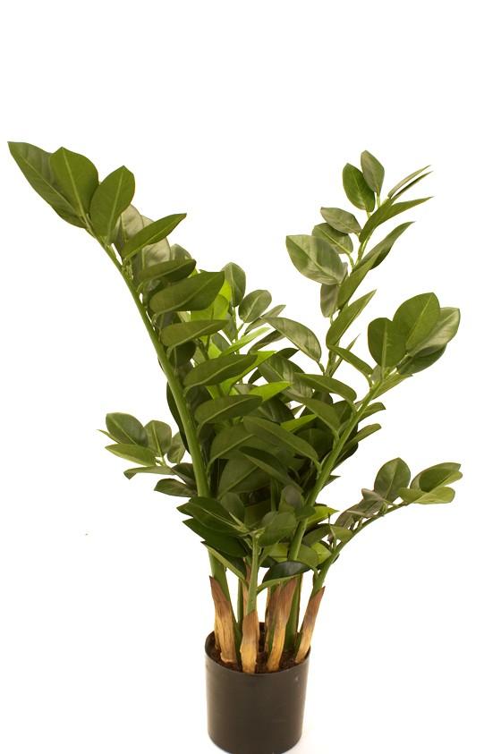 Garderobs-blomma, konstgjord grön växt
