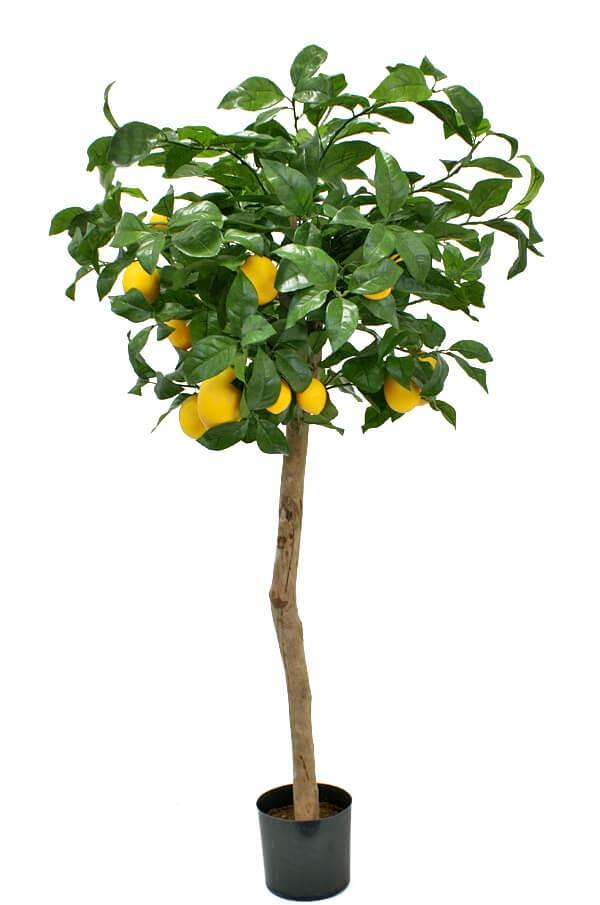 Citronträd, konstgjort träd