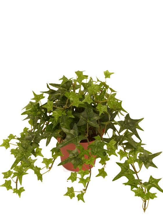 Murgröna, konstgjord krukväxt