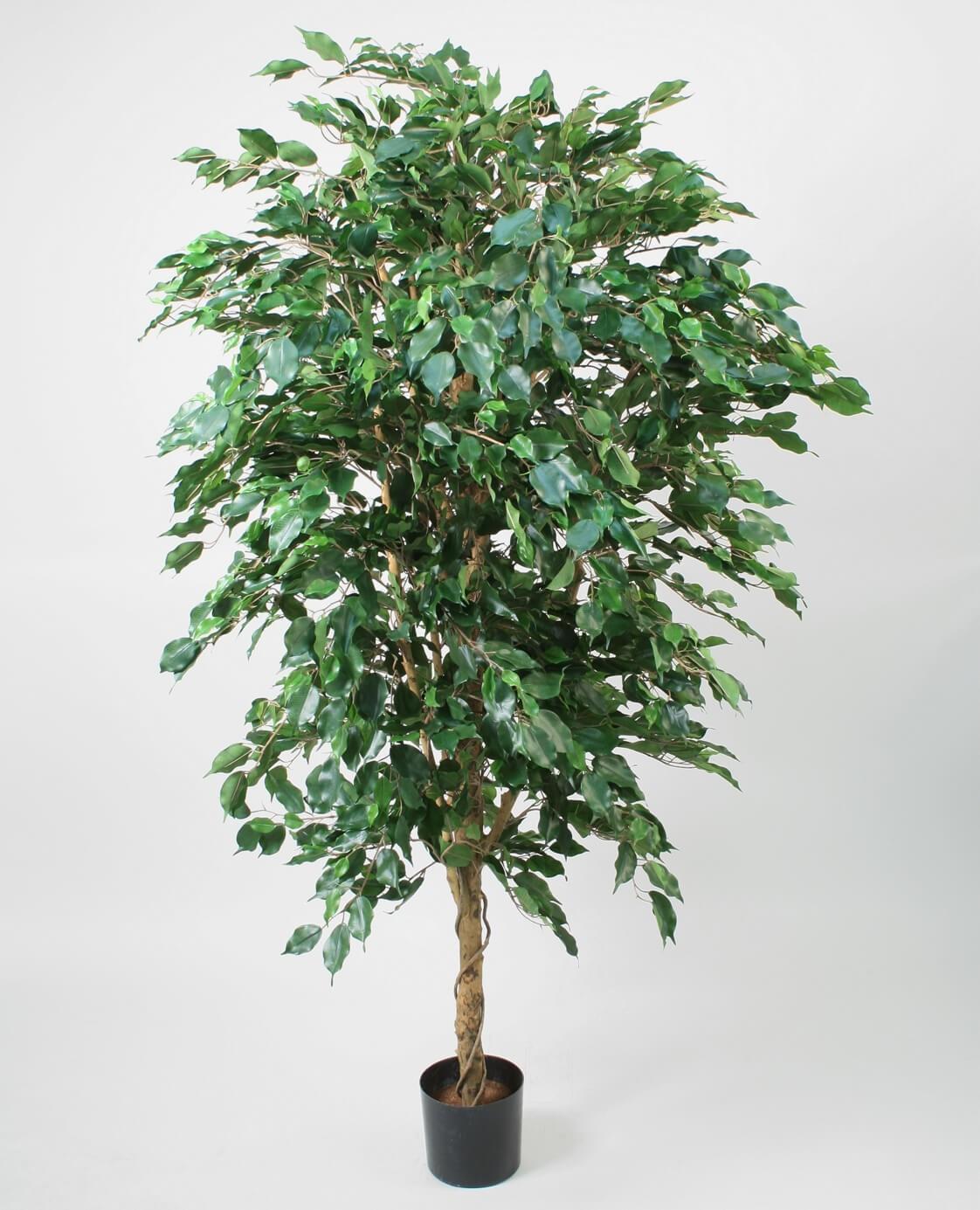 Ficus, konstgjord
