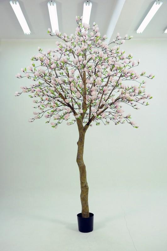 Magnolia träd 350cm