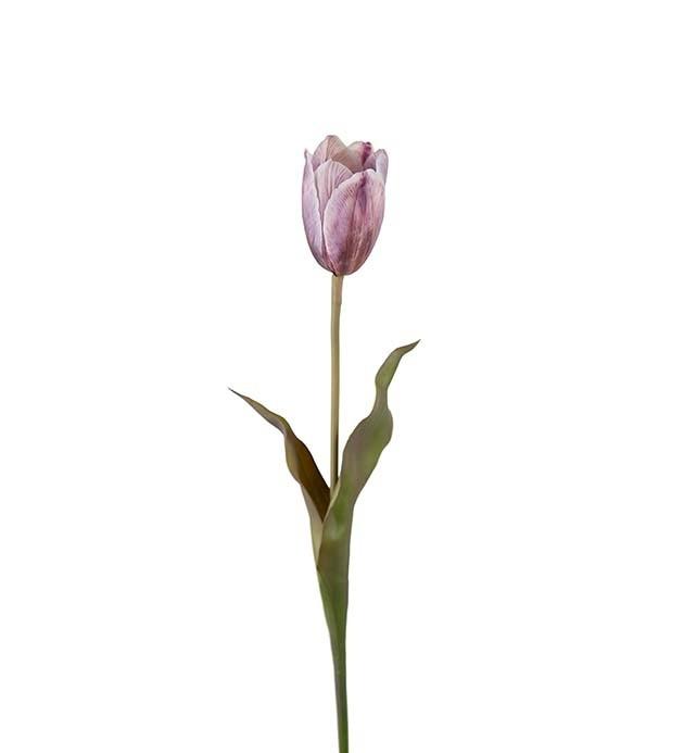 Tulpan, fransk tulpan, konstgjord blomma