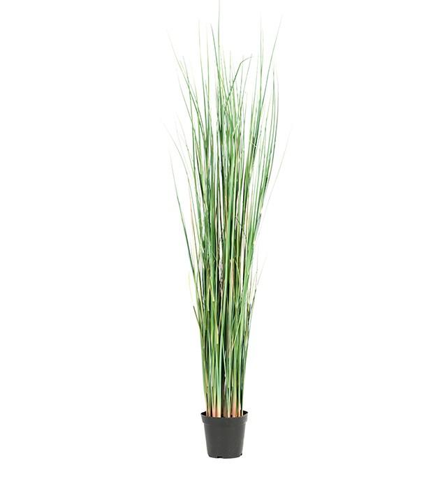 gräs i kruka
