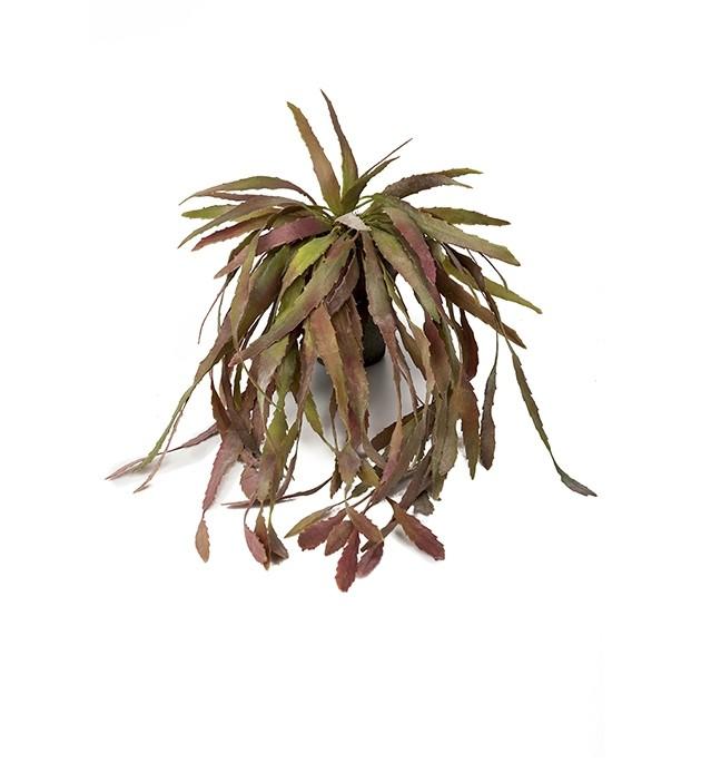 Bladkaktus, Rhipsalis, hängande konstgjord växt