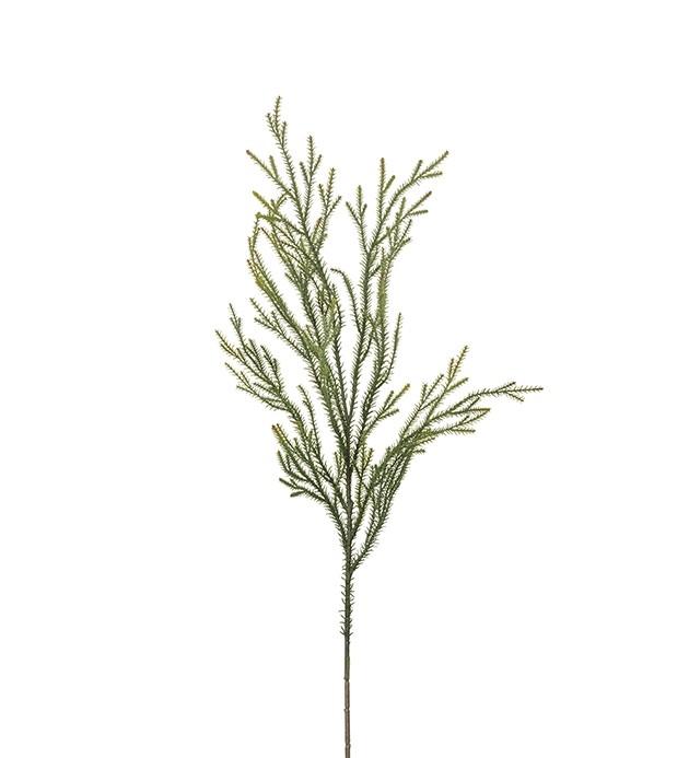 Cryptomeria, konstgjord kvist