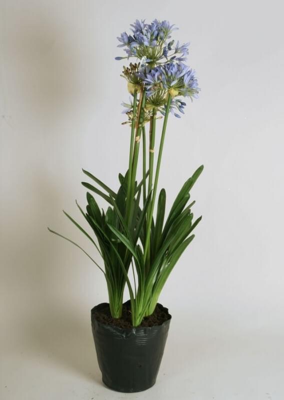 Agapanthus, Afrikas blå lilja, konstgjord blomma
