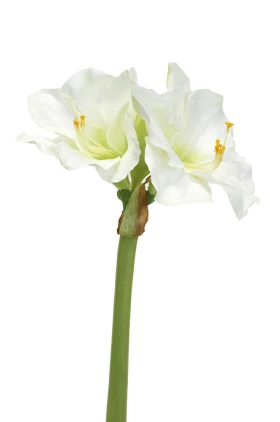 Amaryllis, vit, konstgjord blomma