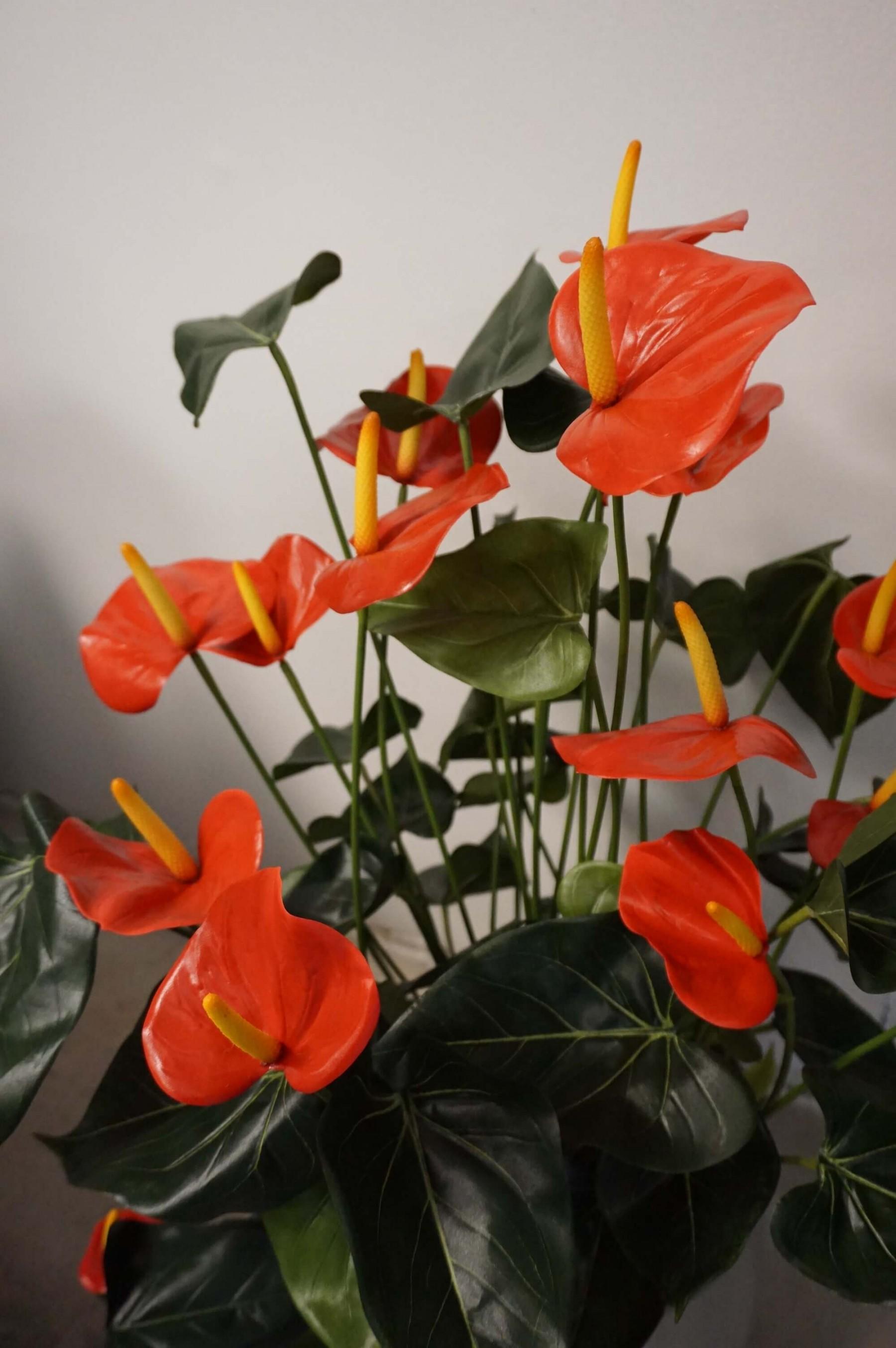 Anthurium, flamingo, röd, konstgjord krukväxt