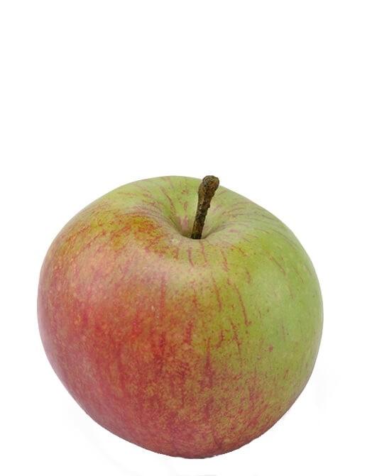 Äpple, höst, konstgjord frukt