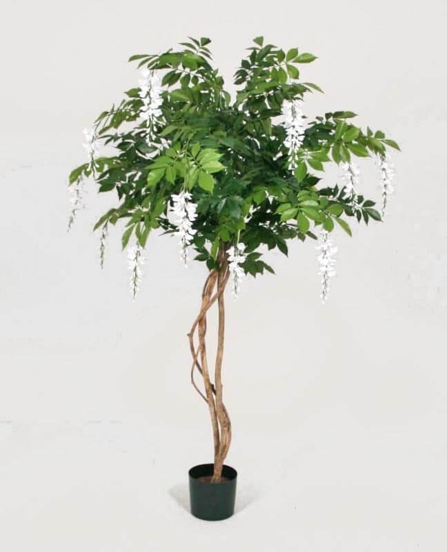 Blåregn, wisteria träd, konstgjort