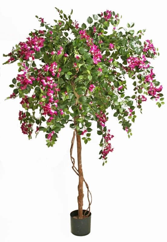 Bougainvillea, lila, konstgjort träd