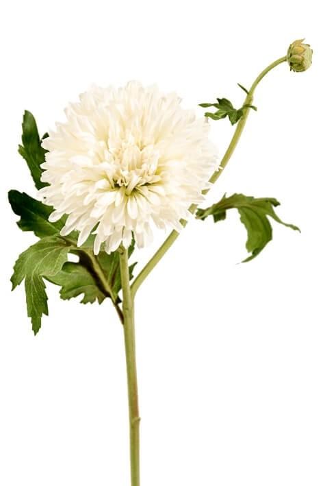 Chrysanthemum, creme, konstgjord blomma