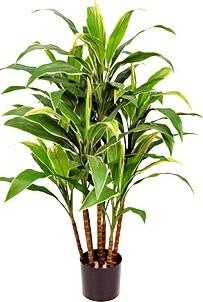 Cordyline, konstgjort träd