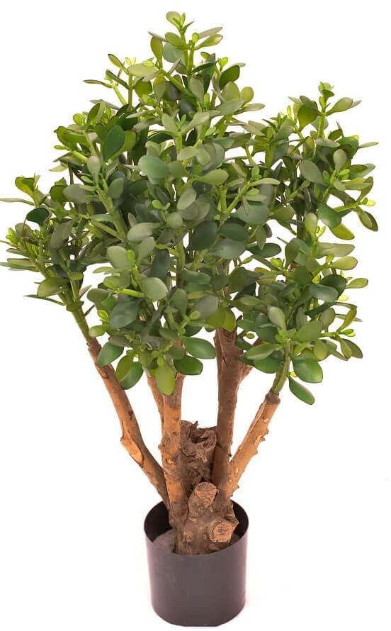 Crassula, konstgjord krukväxt, träd