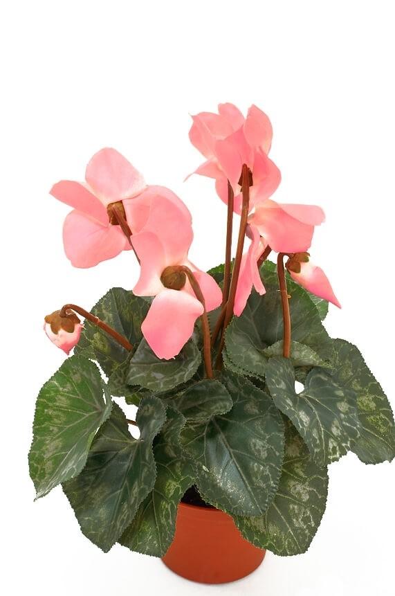Cyklamen, rosa, konstgjord blomma