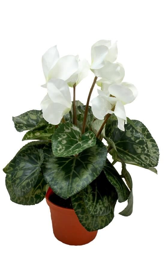 Cyklamen, vit, konstgjord blomma