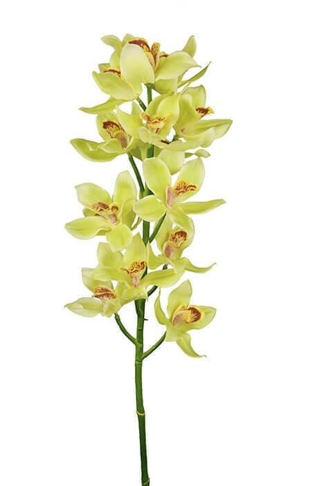Cymbidium, orkidé, konstgjord blomma