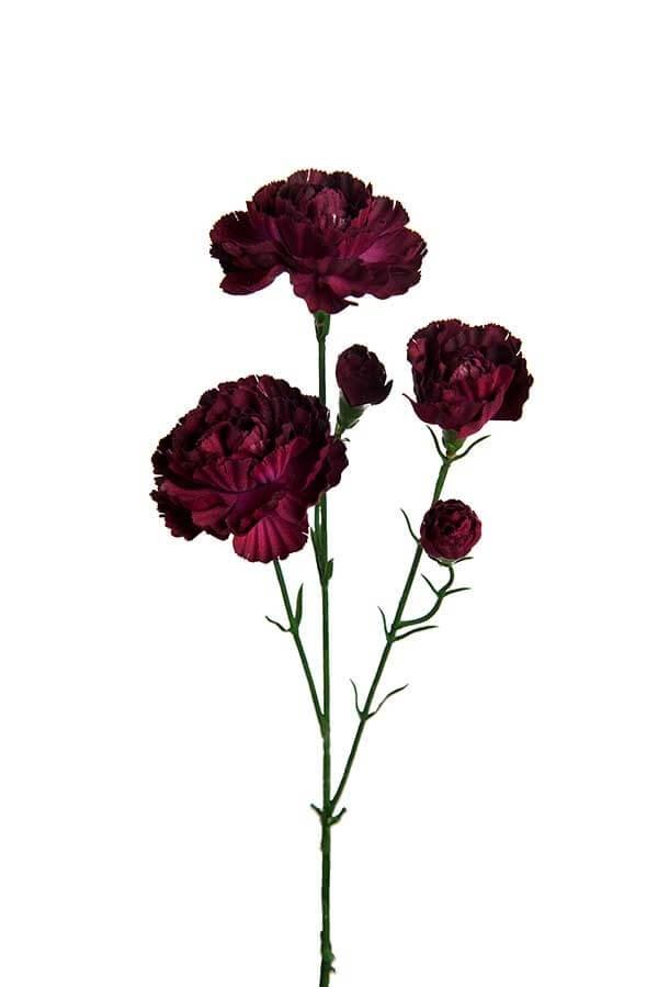 Elegance nejlika, mörk lila, konstgjord blomma