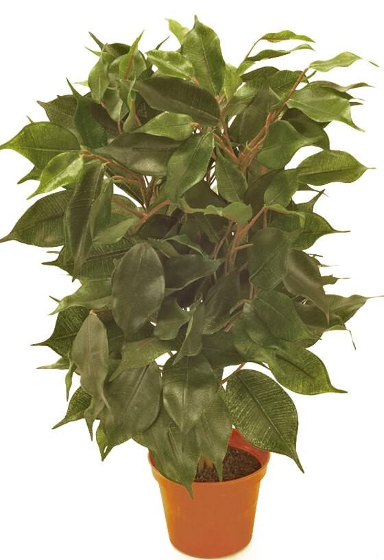 Ficus, konstgjord krukväxt