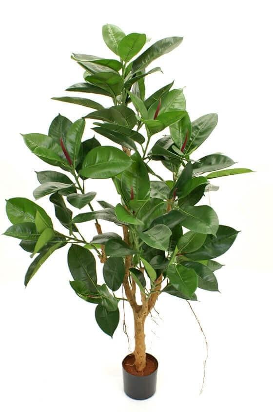 Fikus robusta, konstgjord