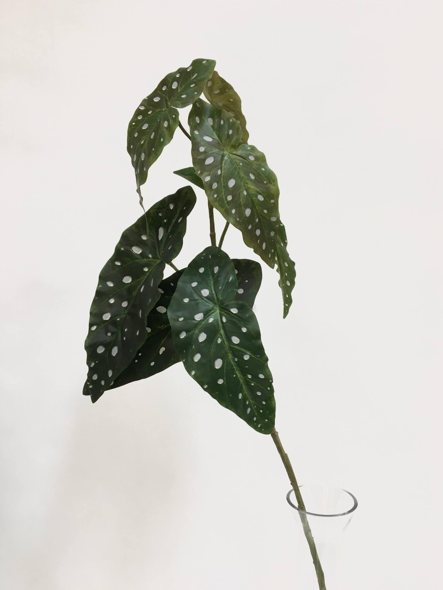Begonia, konstgjord kvist, forell