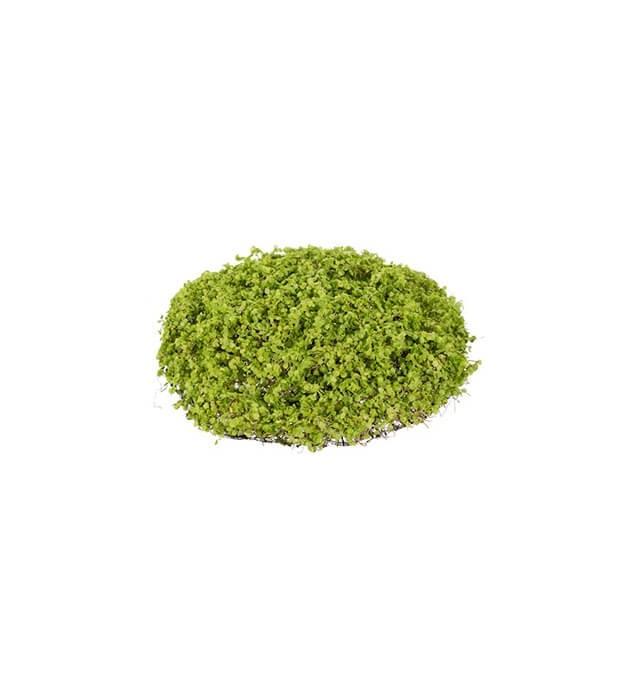 Hemtrevnad, grön, konstgjord