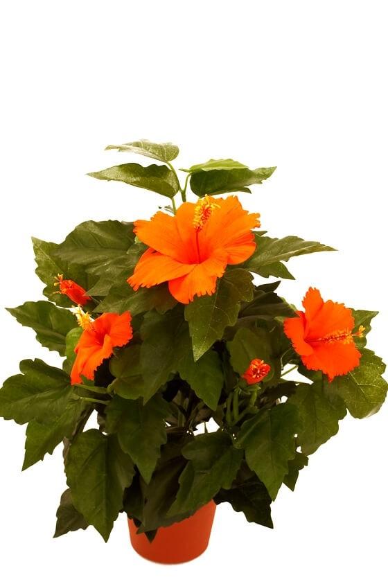 Hibiscus orange, konstgjord blomma