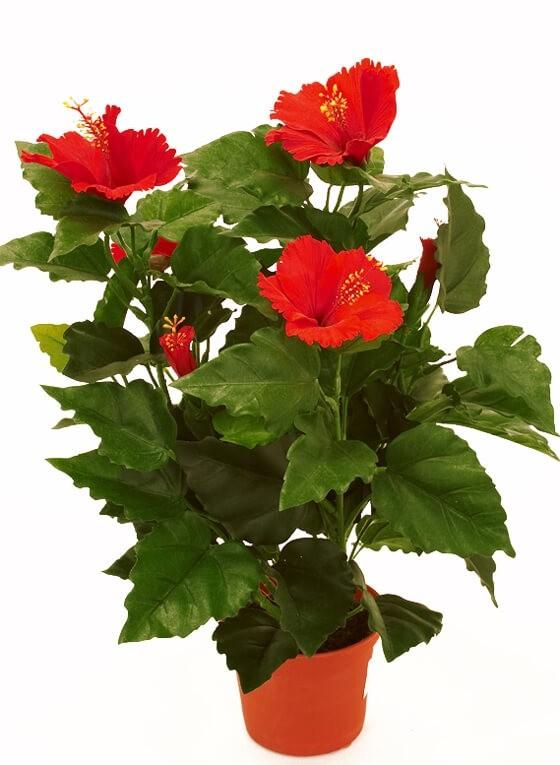 Hibiscus, röd, konstgjord blomma