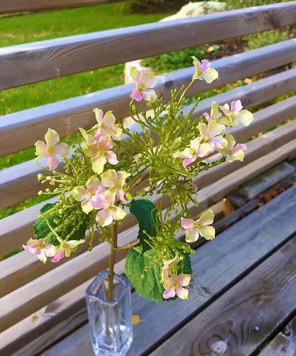 Hortensia, rosa, konstgjord blomma