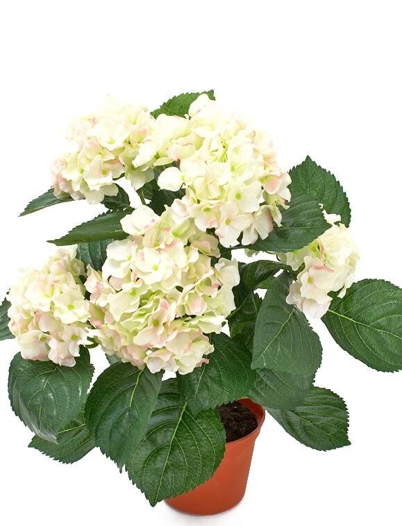 Hortensia, rosa vit, konstgjord krukväxt