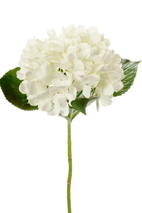 Hortensia, vit, konstgjord blomma