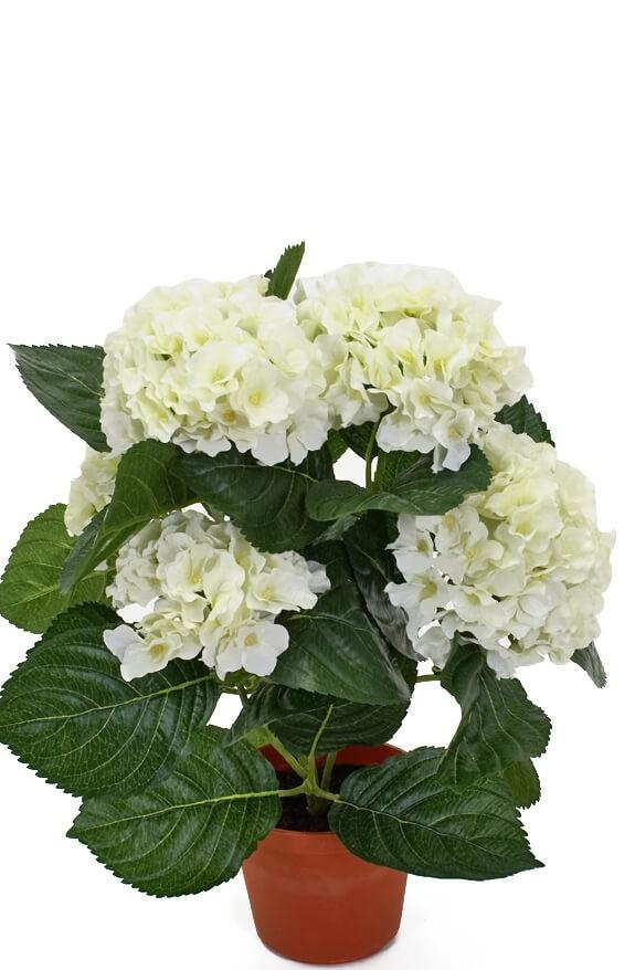 Hortensia, vit, konstgjord krukväxt