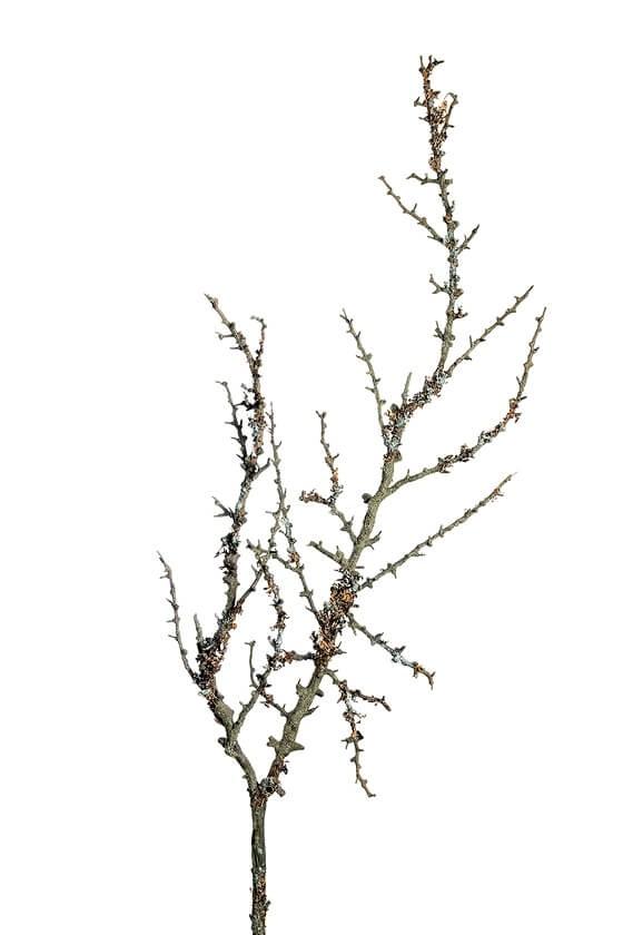 Kvist, grå brun, konstgjord
