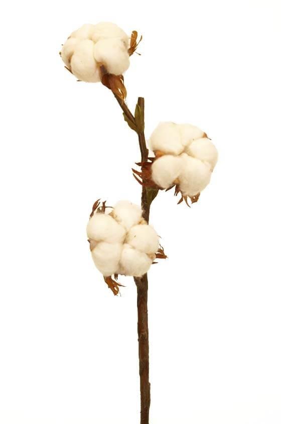 Äkta bomull på konstgjord kvist