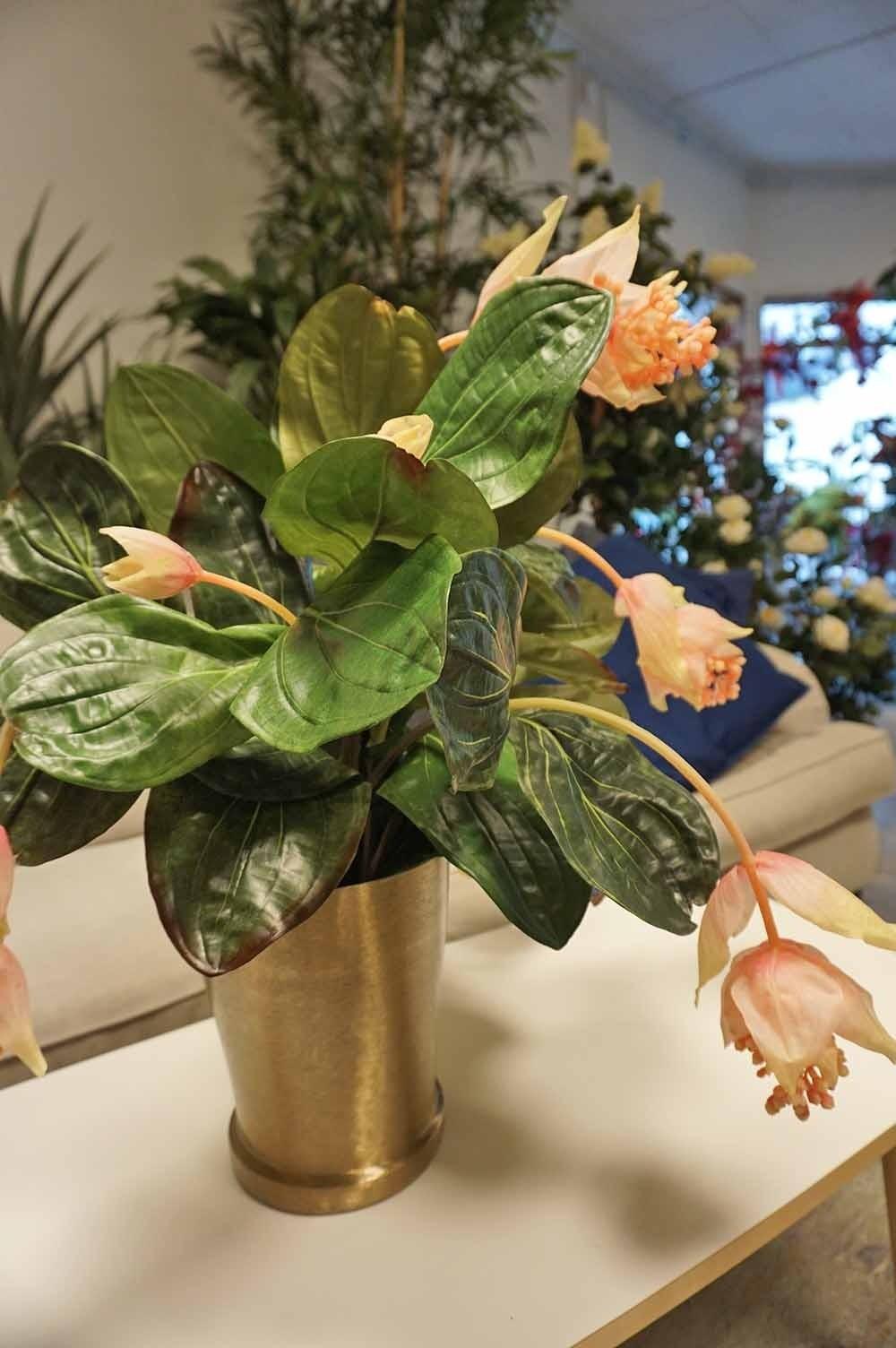 Medinilla, Rosenskärm konstgjord krukväxt