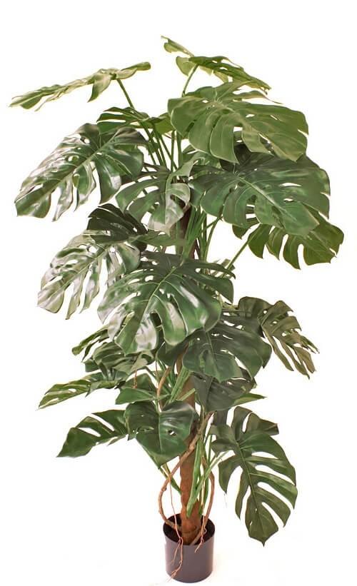 Monstera, konstgjorda gröna växter