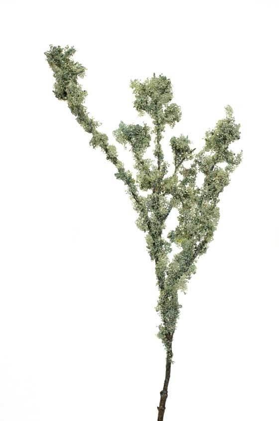 Mosskvist, grå grön, konstgjord