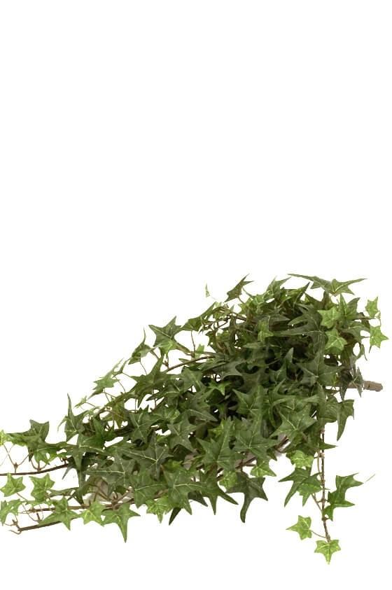 Murgröna, flikig, konstgjord