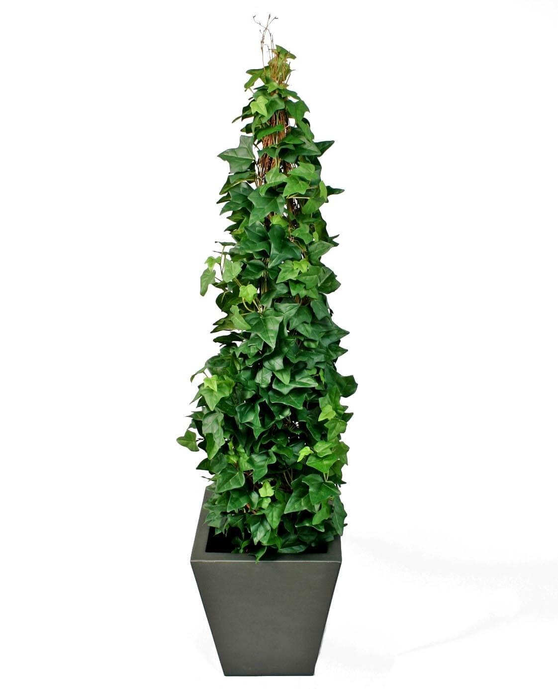 Murgröna, på stock, konstgjord