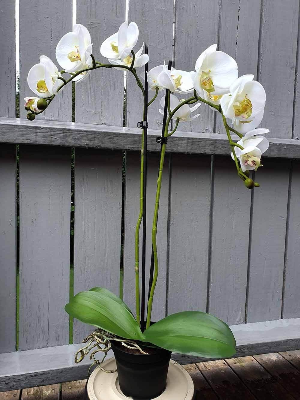 Orkidé, 2-stängel, vit, konstgjord