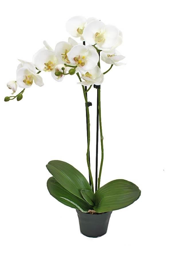 Orkidé i kruka, 2-stängel, vit, konstgjord
