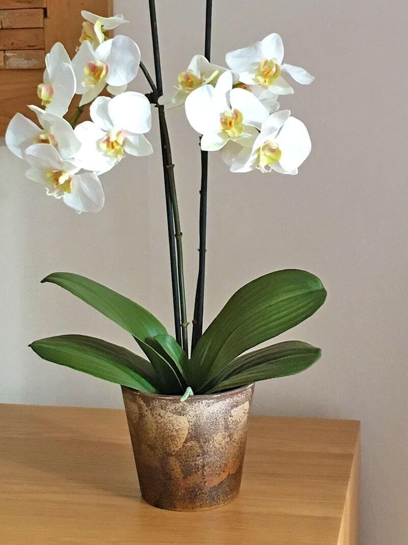 Orkidé i kruka, 2-stängel vit, konstgjord