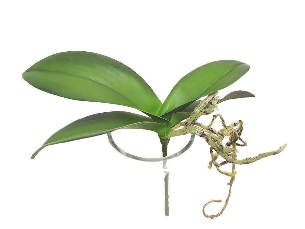 Orkidéblad, mindre, konstgjort