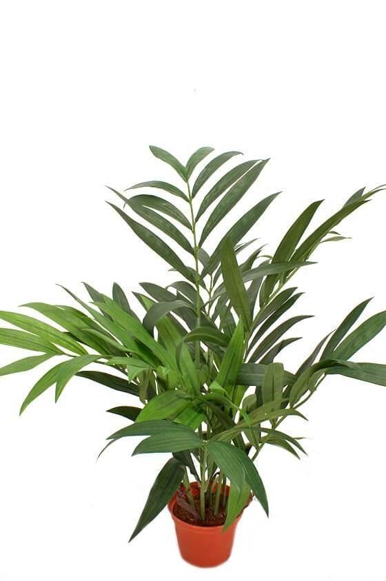 Palm, konstgjord krukväxt