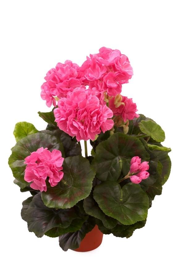 Pelargonia, ljus lila, konstgjord blomma