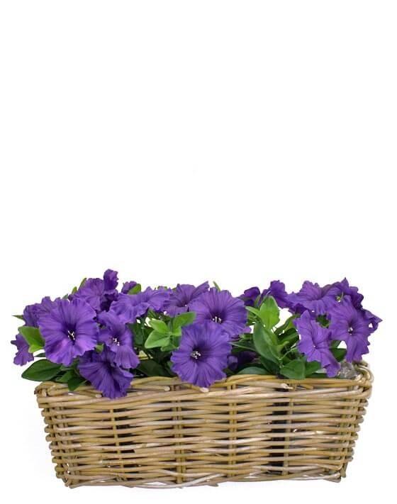Petunia, blå, konstgjord blomma