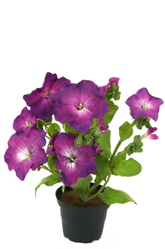 Petunia i kruka, lila, konstgjord