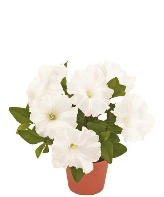 Petunia, vit, konstgjord blomma