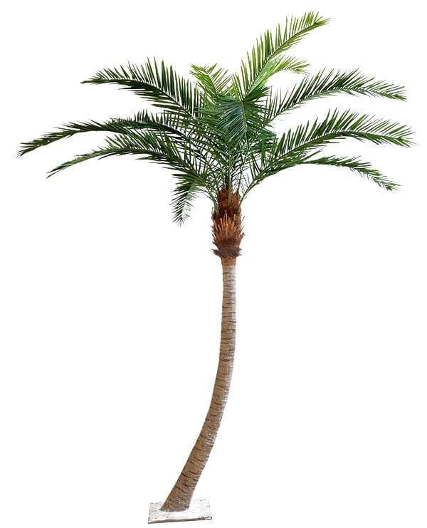 Phoenix canarie palm, konstgjord