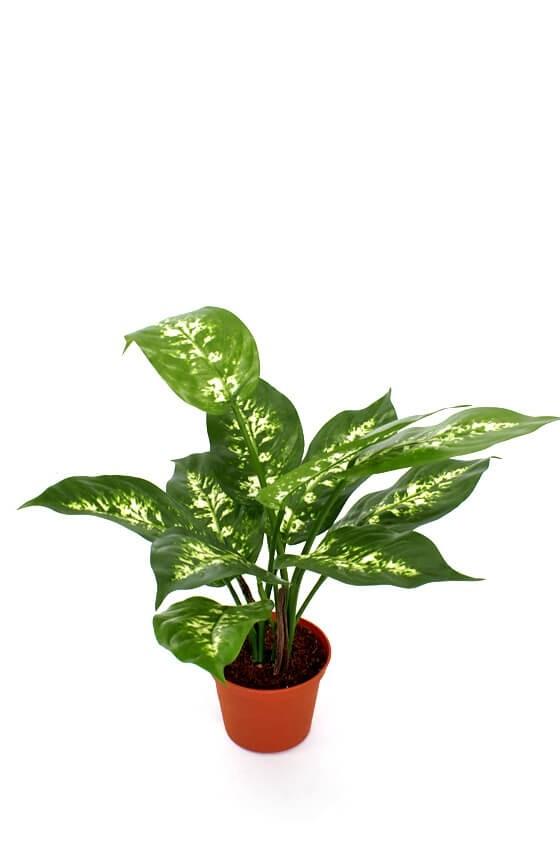 Prickblad, konstgjord krukväxt